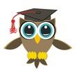 graduate owl - university owl
