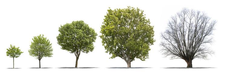 Différentes étapes de la vie d'un arbre sur fond blanc