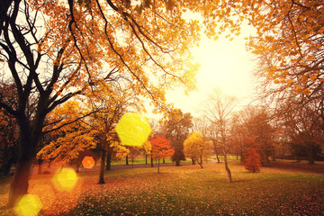 autumn sunlight