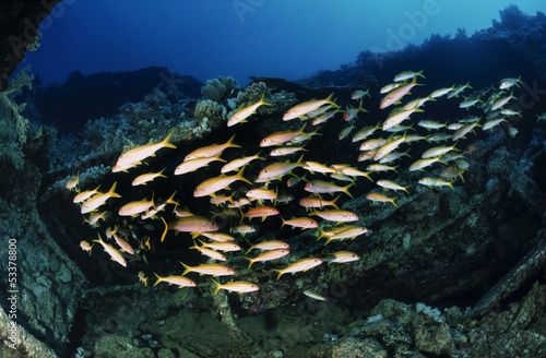 Egypt, Red Sea, Hurghada, a school of mullets