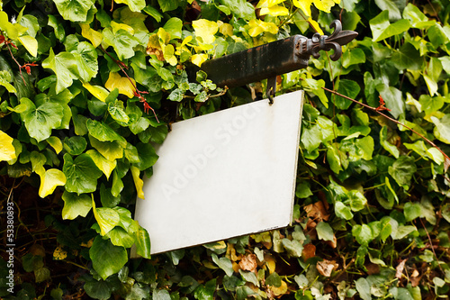 Blank rustic sign with foliage background