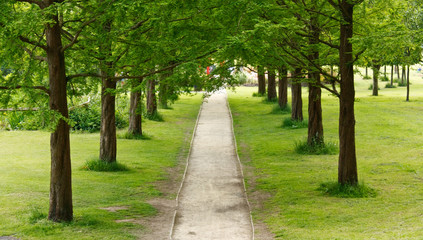tree lined path into the distance