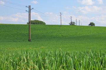 Stromleitung im Feld