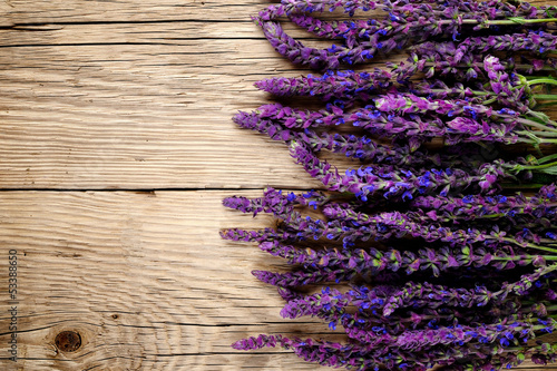 Salvia flowers on wooden background