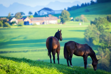 Two horses at pasture with mountains.