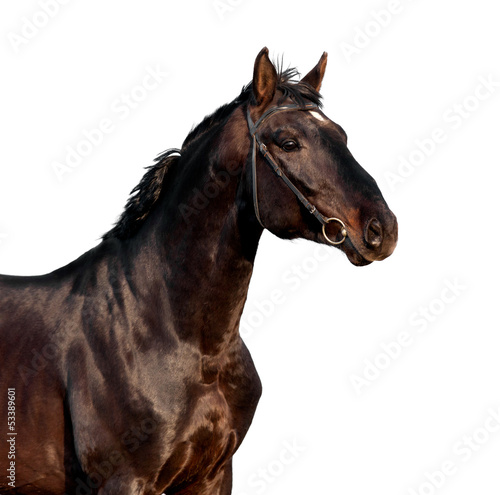 Brown horse head isolated on white background.