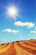 sunny harvested field