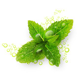 Green mint leaves with water drops isolated on a white