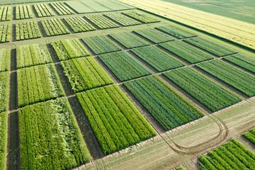 Photo aérienne agriculture