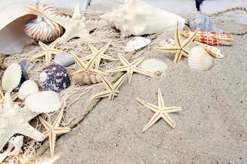 Auszeit am Strand / Muscheln, Sand und Seesterne