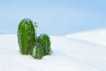 Glacial cactus