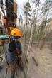 Boy climber stands on a platform on a tree