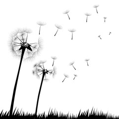 Dandelion vector in a grass field