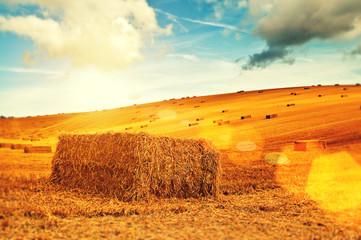 sunshine hay bales