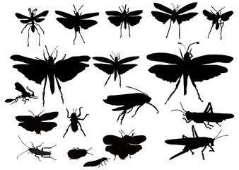 grasshoppers and other insects