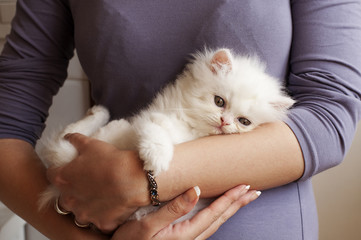 Girl holding white kitten
