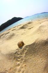 砂浜を歩くヤドカリ