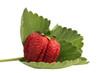 Erdbeere auf Blatt, freigestellt vor weiß