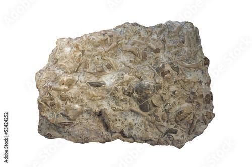 Fossiliferous limestone - 53424252