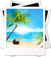 Фотография пальмы на фоне моря