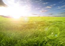 Zachód słońca i trawy pola