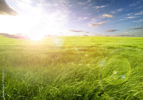 Puesta de sol y campos de hierba - 53426255