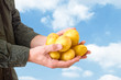 Farmer holding potato