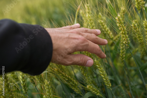 Farmer in wheat field