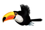 Flying toucan