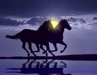 Horses running at sunset with water reflection