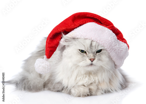 christmas cat in red Santa Claus cap isolated on a white