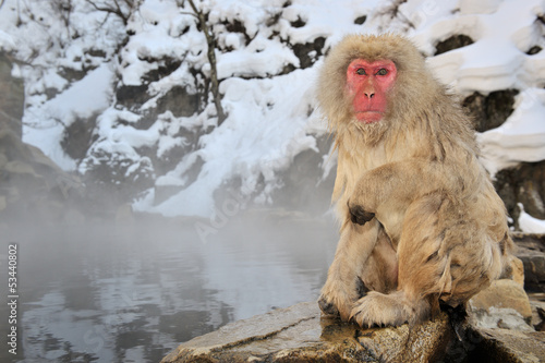 Japanese Macaque sitting next to a hot spring.