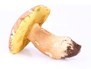 Boletus edulis isolated