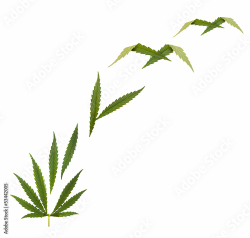 marijuana legalization  - creative collage, isolated on white