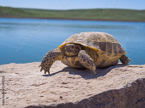 Fotobehang Schildpad Resting tortoise