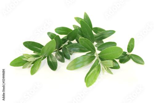 Keuken foto achterwand Olijfboom Olivenzweige