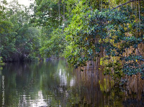 Tropical thickets mangrove forest on the Black river.Jamaica.