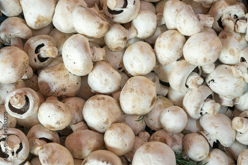 Champignons for sale