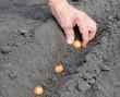 Senior woman planting onion