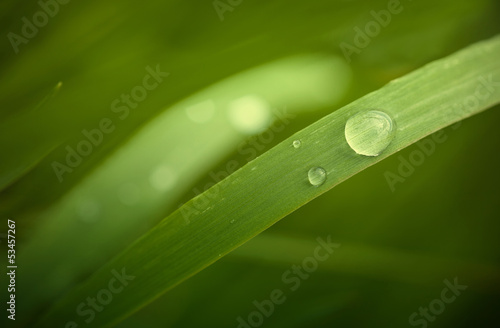 Plant leaf droplets