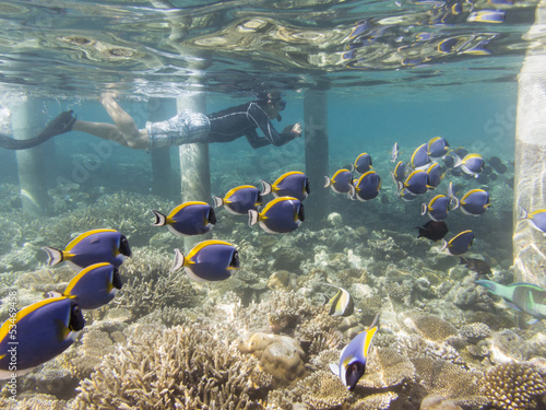 House reef snorkeling in the Maldives