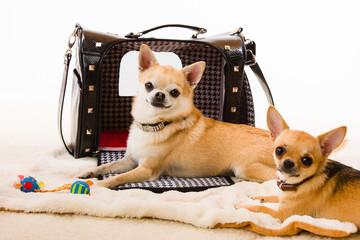 Dogs and bag
