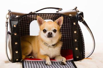 Dog and bag