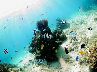 たくさんの熱帯魚