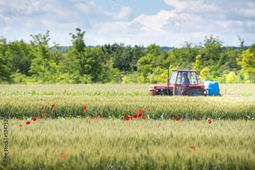 Tractor spraying wheat