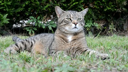 Beautiful cat relaxing in the garden