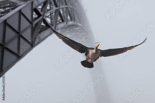 Porto cormorant © Zacarias da Mata