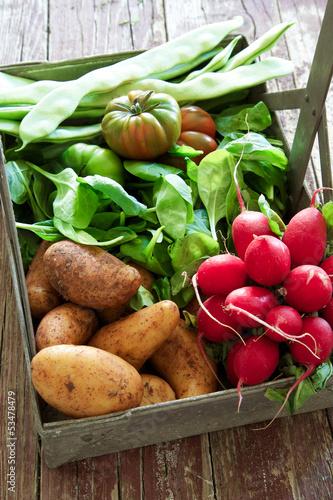 frisches Gartengemüse