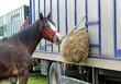 A Horse Feeding From Hay at a Horsebox Vehicle.