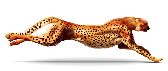 Leopard in a jump. Illustration. For more details traced wool